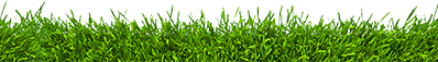 grass_edge_top.png